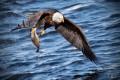 ¿Es incorrecto utilizar a un águila que se alimenta de los cadáveres de otros animales para representar a Dios?